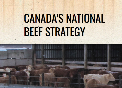 National Beef Strategy